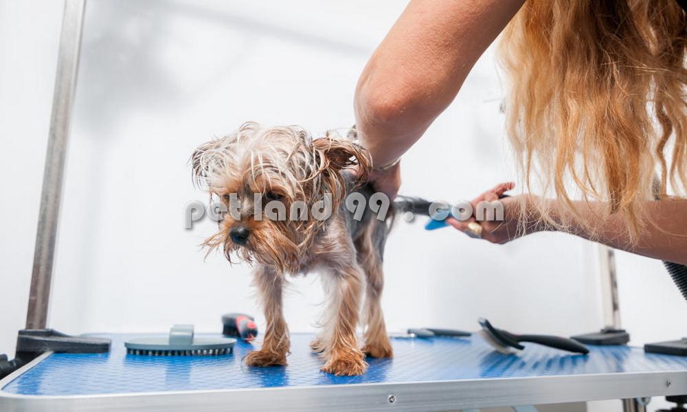 شستشوی سگ خانگی