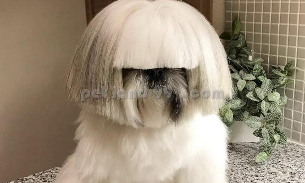 آرایش چتری سگ