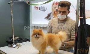 هنرجو آرایش حیوانات